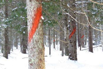 orange forest paint