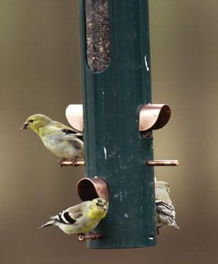 feeding birds in winter