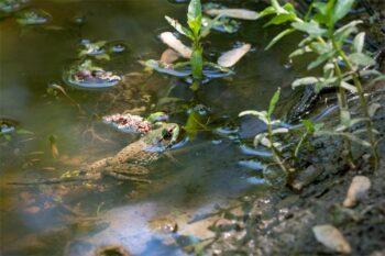 frog and amphibians