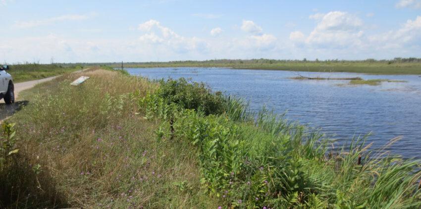 Tuttle marsh