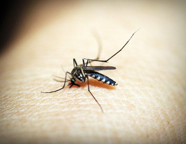 Mosquitos – Avoid the bite