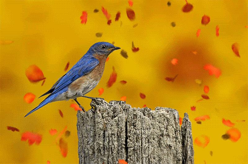 MI Fall Birding