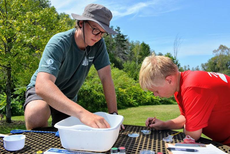 identifying water bugs
