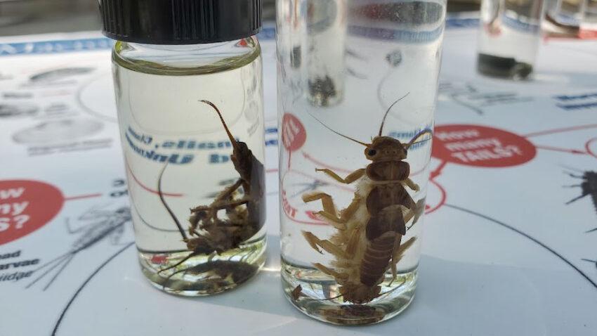 macroinvertebrates in small glass vials