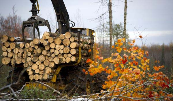 Logging may cause delays on Sand Hill Trail in Alcona, Alpena counties