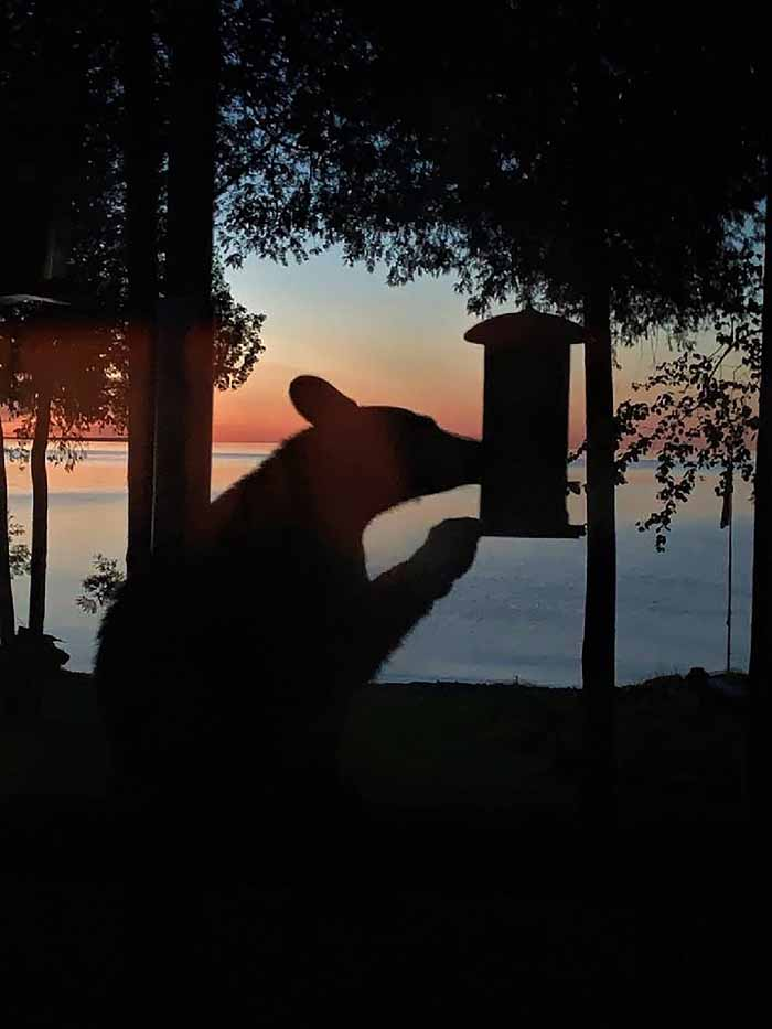 Take down your feeders: The bears are coming!