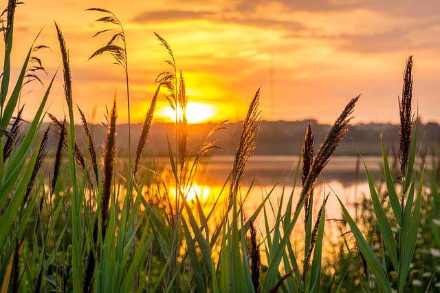 Finding peace through meditation